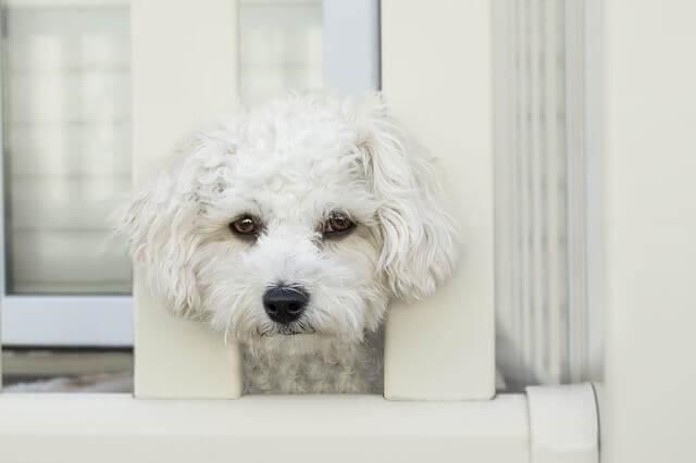 Rinite (Inflamação do nariz) e sinusite em cães