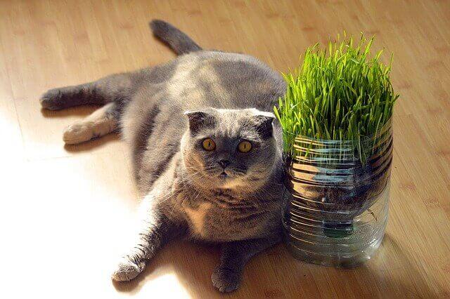 Intolerância ao glúten nos gatos