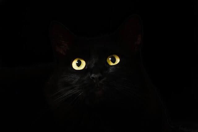 Intoxicação por aspirina em gatos