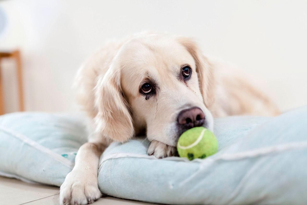 Lúpus discoide | Causas, Sintomas e Tratamento