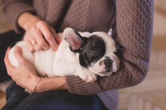 3 maneiras de ajudar seu animal de estimação ter uma vida mais longa