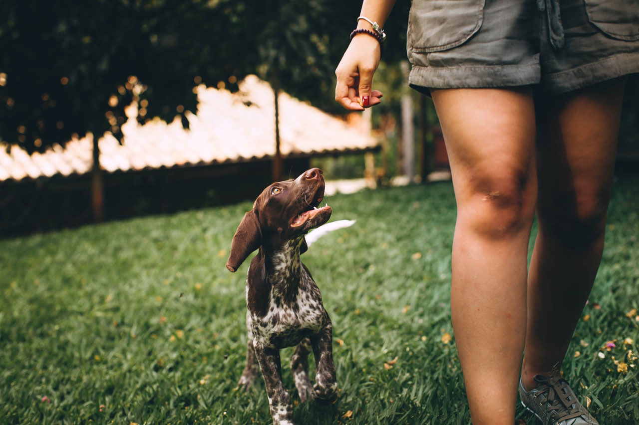 Mantenha esses três alimentos longe do seu cão