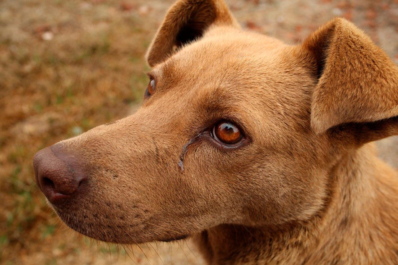 Mau cheiro no cachorro | Causas e Sintomas