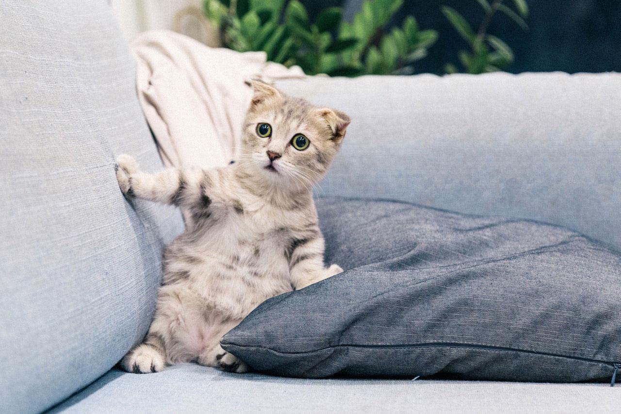 Medicamentação líquida para gatos | Como dar o remédio