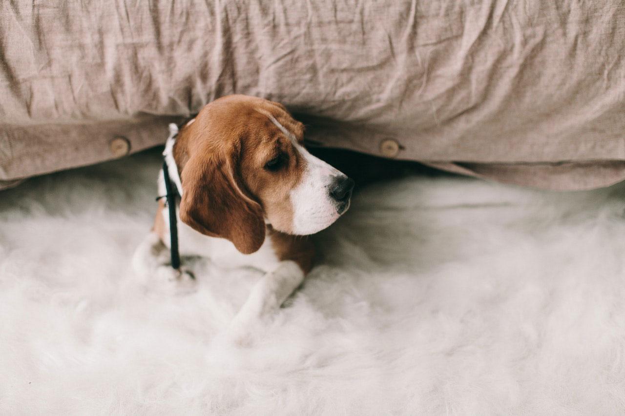 Medicamentos para dor para cães