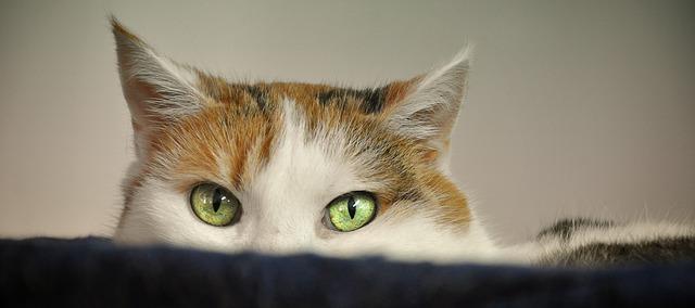 Medo e ansiedade nos gatos