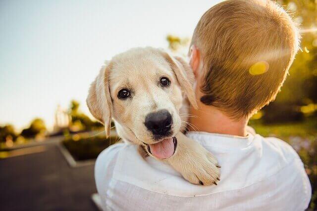 Meu cachorro é feliz?