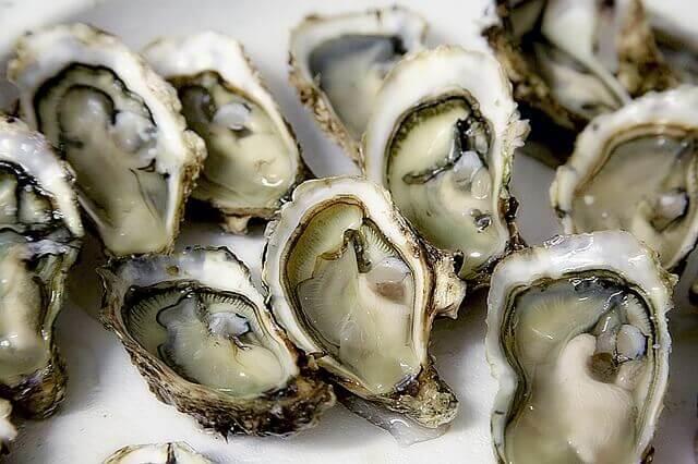 Meu cachorro pode comer ostras?