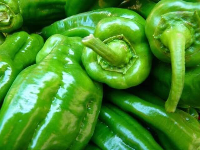 Meu cachorro pode comer pimentão verde?