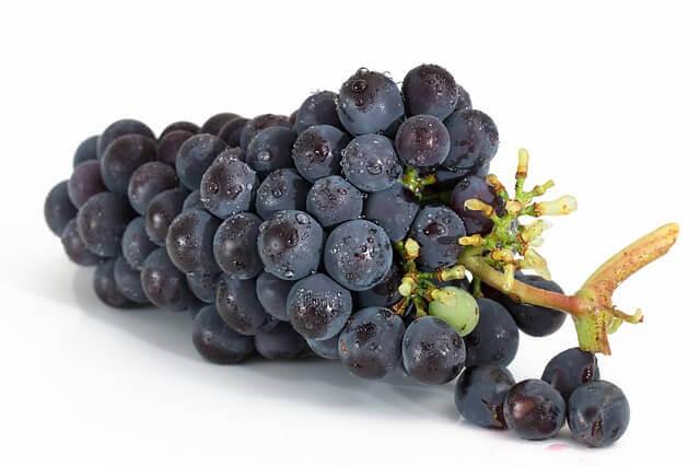Meu cachorro pode comer uva