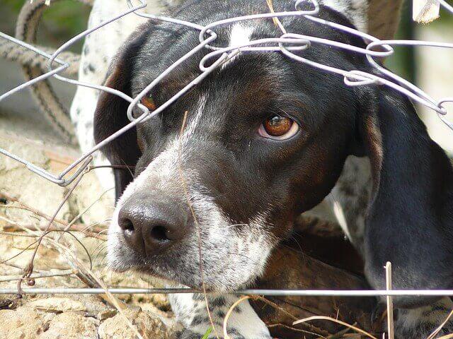 Meu cachorro pode ter Autismo?