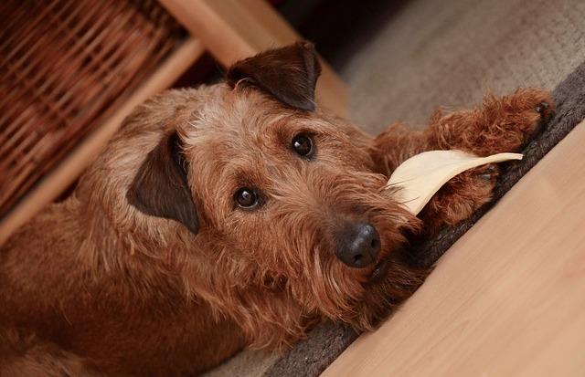 Meu cachorro tem má digestão?