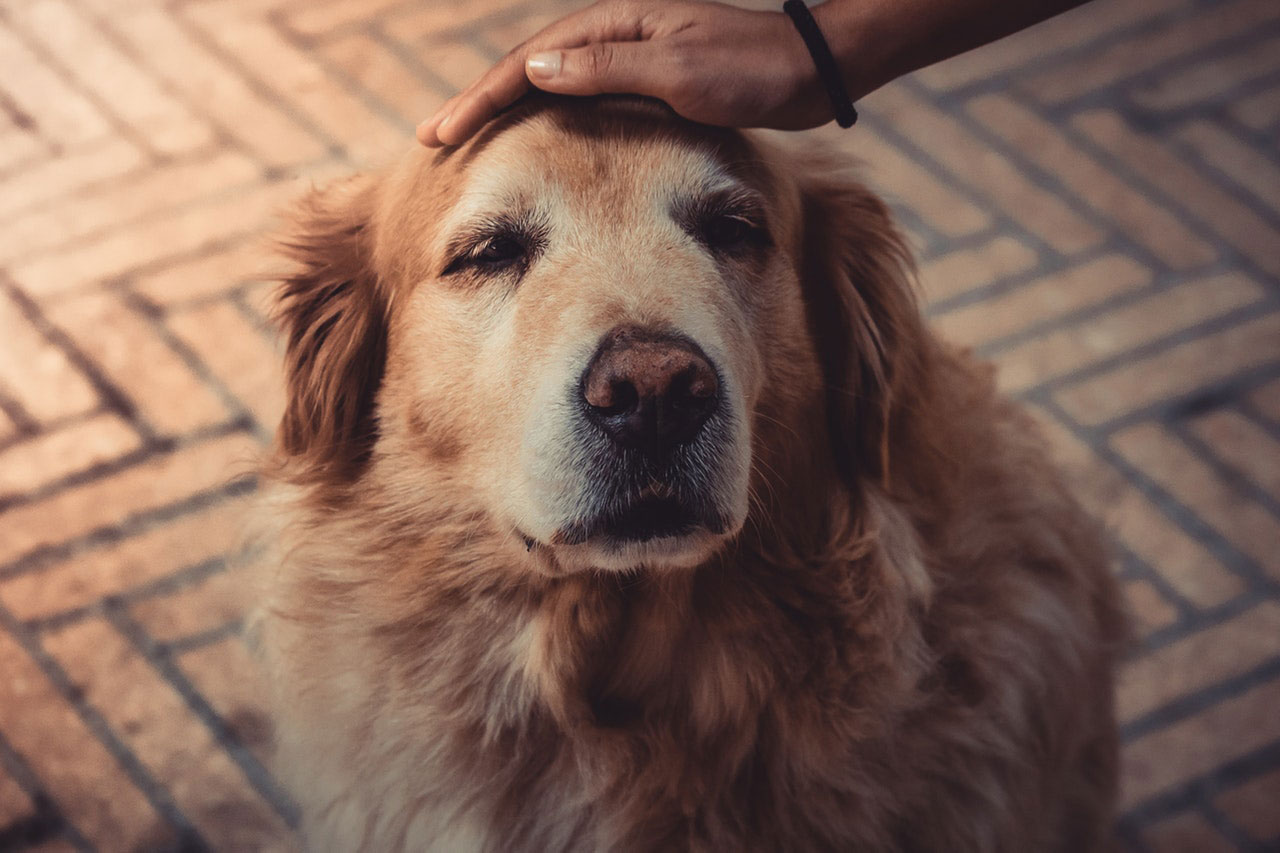 Meu cão comeu o medicamento para pressão alta | O que fazer?