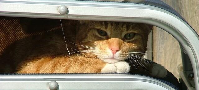 Meu gato pode tomar Dramin?