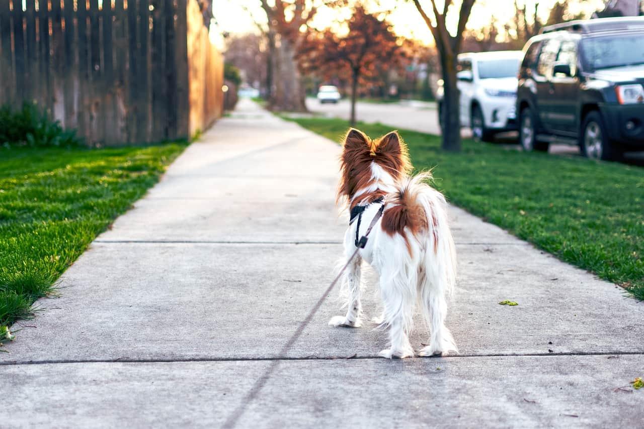 Meu Pet parou de andar | Causas e O que fazer