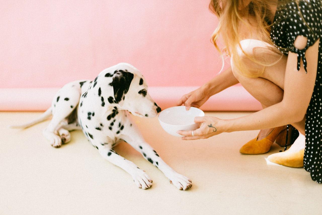 O leite é seguro para o meu cão?