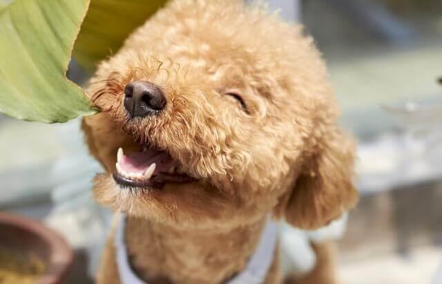 O que é a doença periodontal em cães?