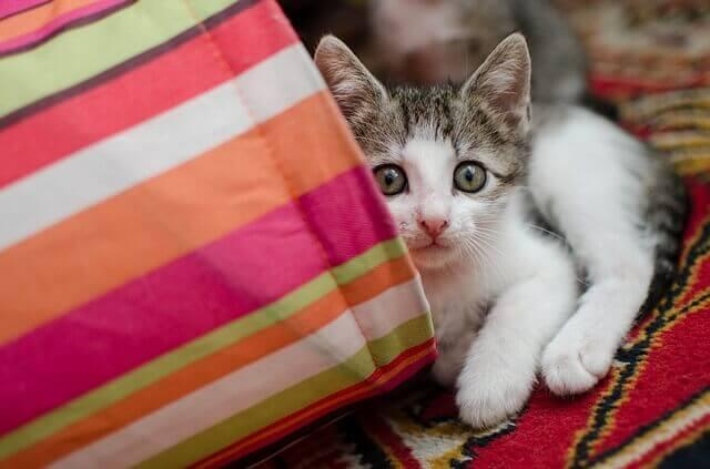 O que é mortal para os gatos?