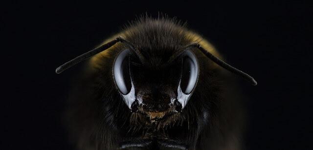 O que fazer se o seu cão for picado por uma abelha: Primeiros socorros