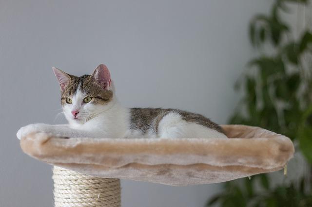 O que os gatos fazem o dia todo?
