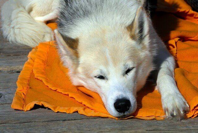 O que são condroprotetores para cães?