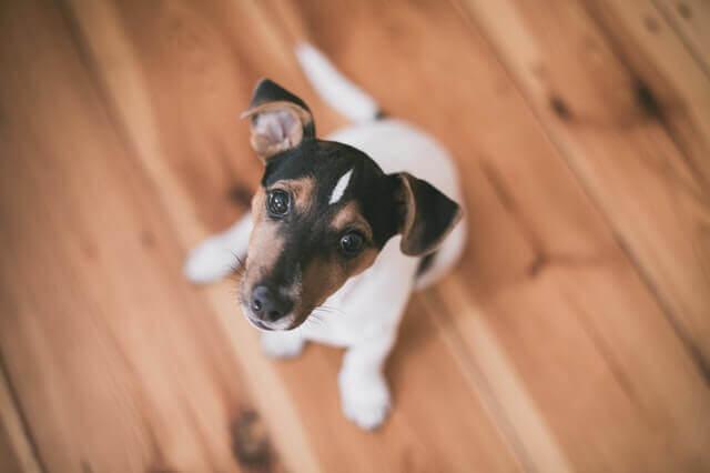 Obstrução intestinal nos cães