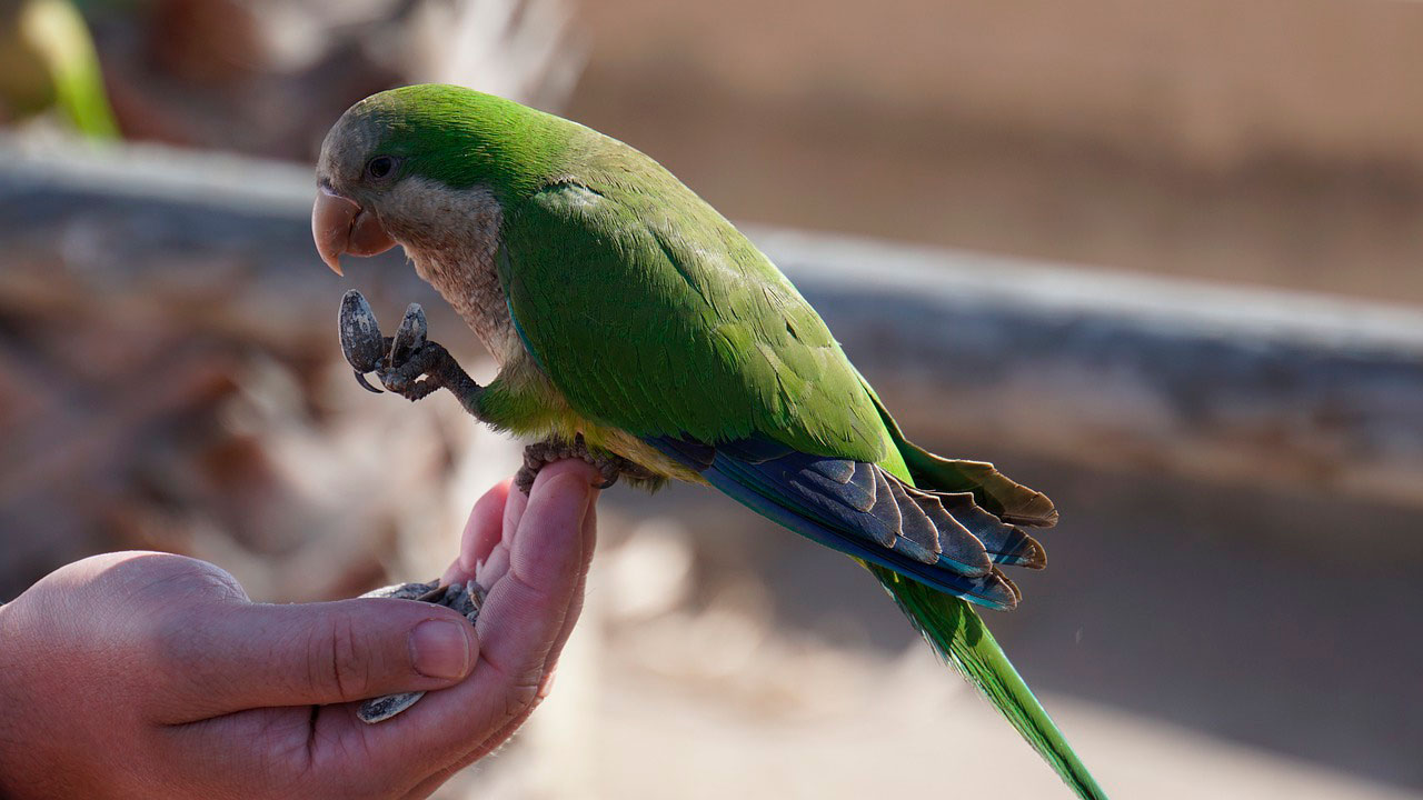 Óleos essenciais para pássaros