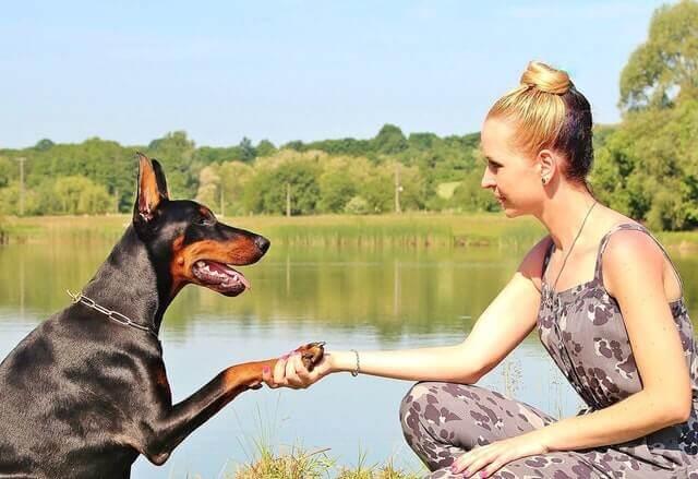 Os cães e gatos podem distinguir entre os gêneros humanos?