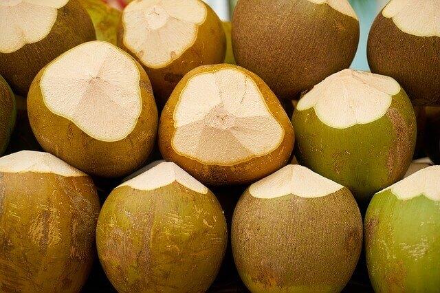 Os cães podem comer coco e beber água de coco?
