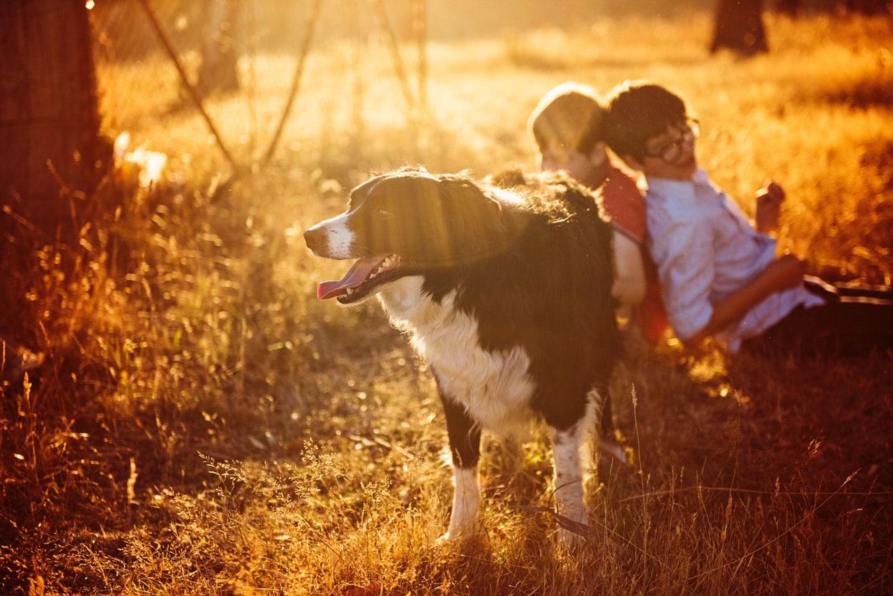 Os cães podem sentir cócegas?