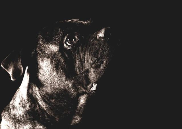 Os cães podem ver à noite?