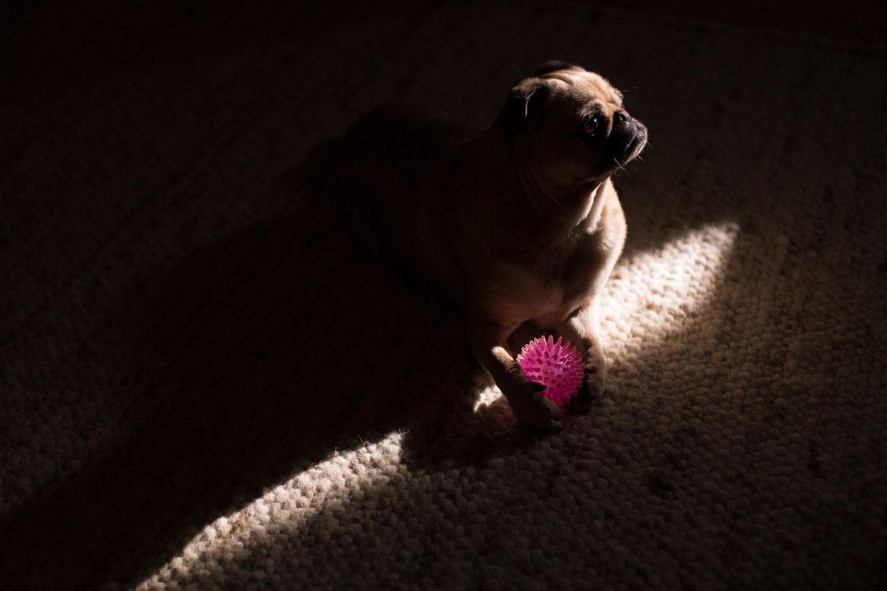 Os cães têm medo do escuro?