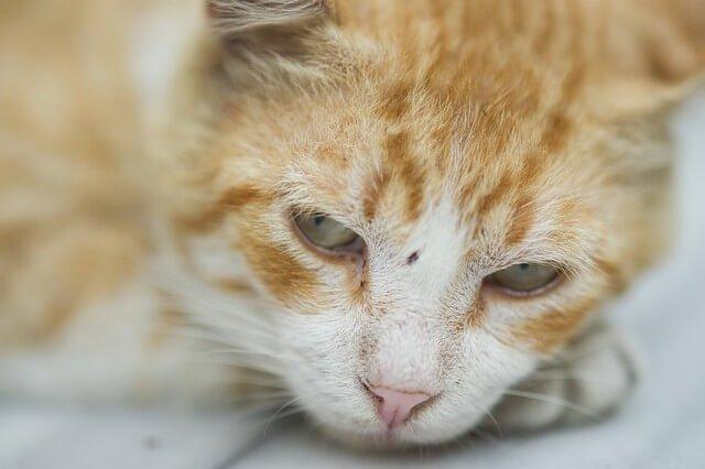 Os gatos podem ficar resfriados?