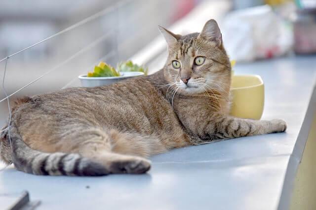Os gatos têm uma boa memória?