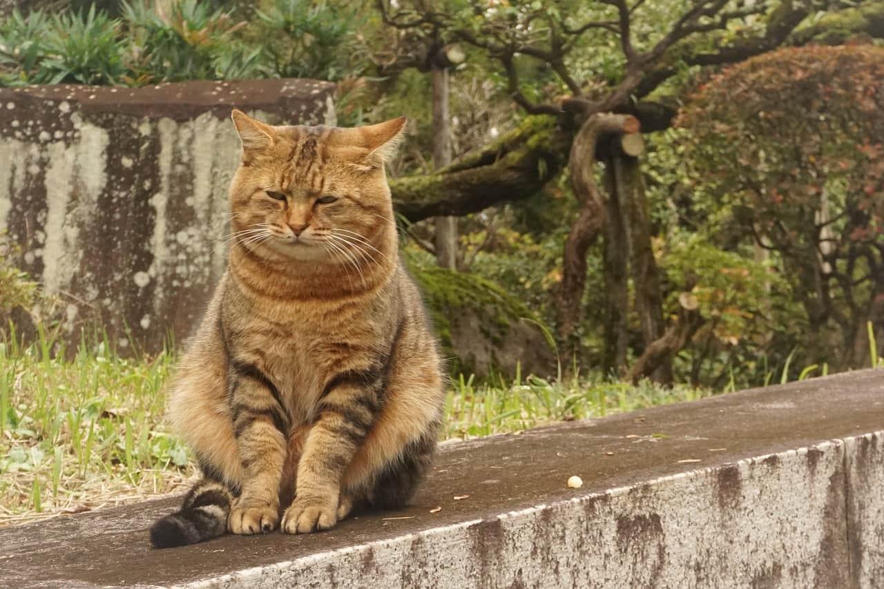 Penicilina para gatos | Usos, Administração e Ação