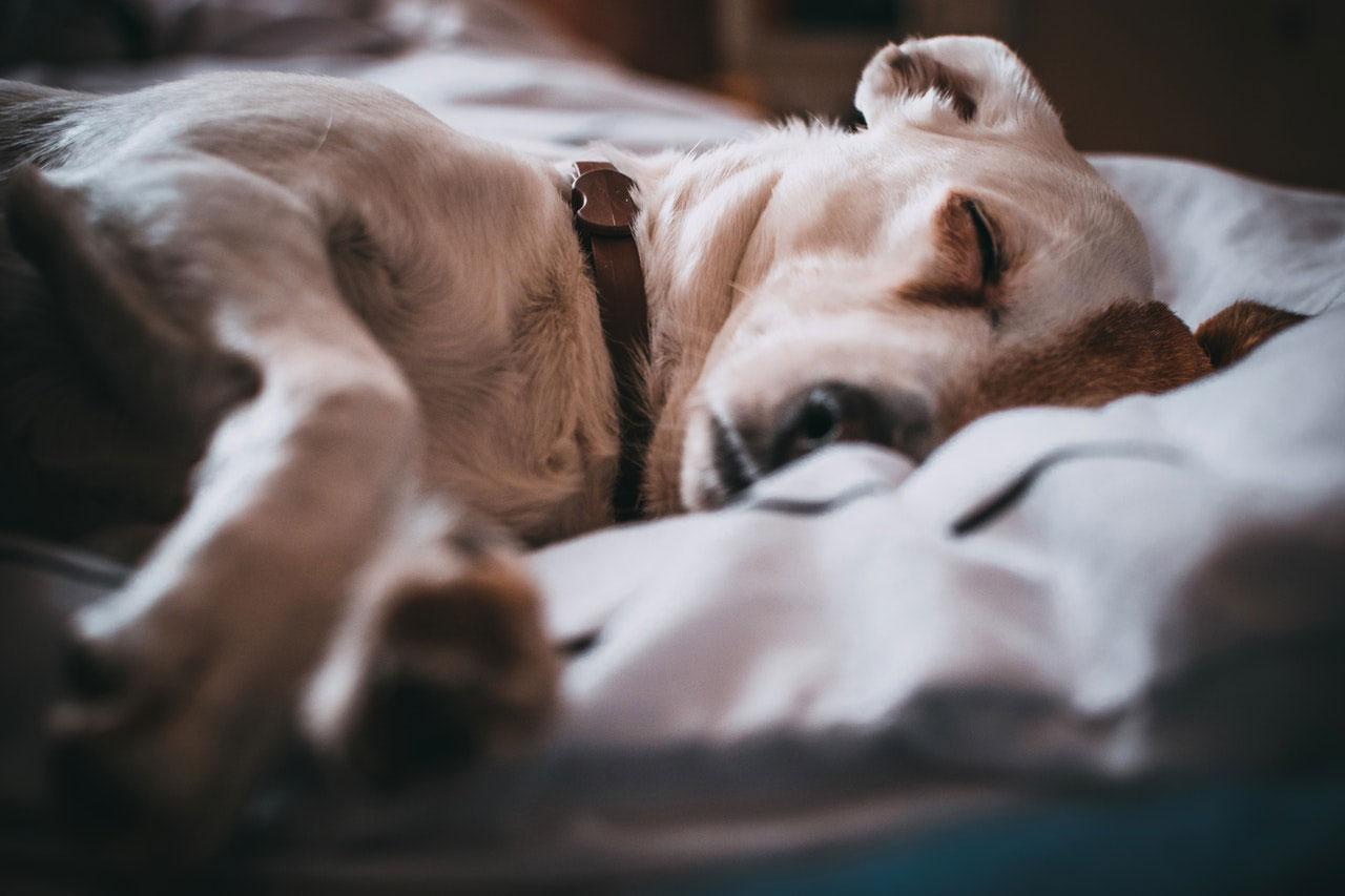 A personalidade de um cão muda à medida que envelhecem?