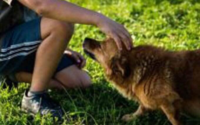 O que são pontos quentes em cães?