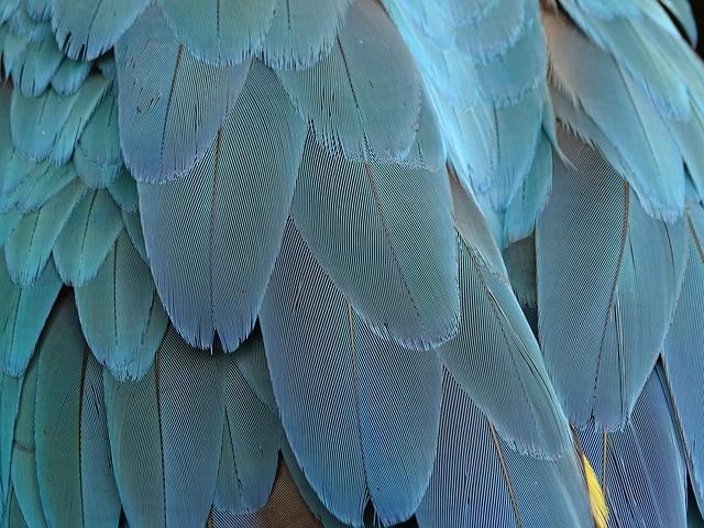 Por que as aves arrancam as penas?
