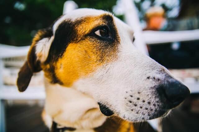 Por que cachorros têm bigodes?