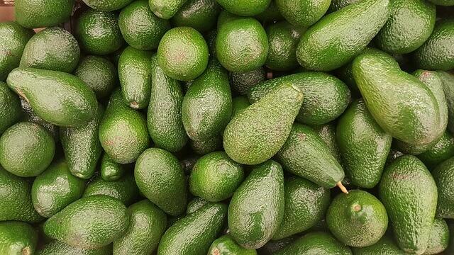 Por que os abacates são ruins para as aves