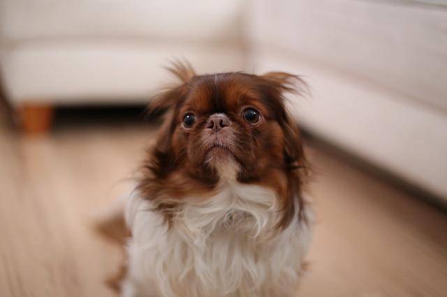 Por que alguns cães têm medo de objetos?