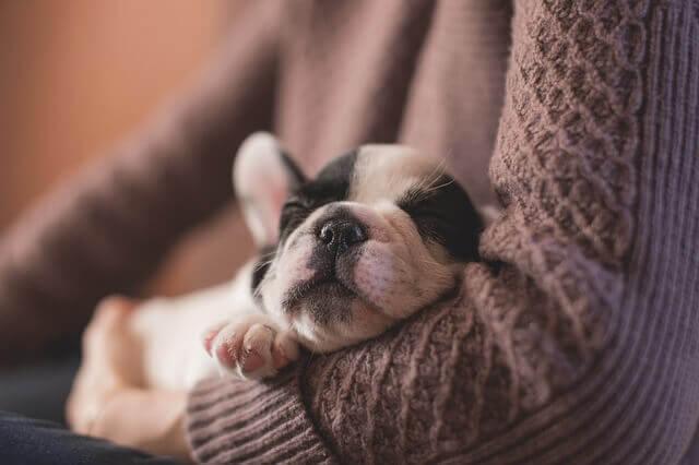 Por que meu cão respira tão rápido enquanto dorme?