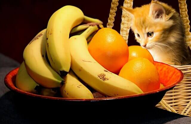 Por que meu gato é um comedor exigente?