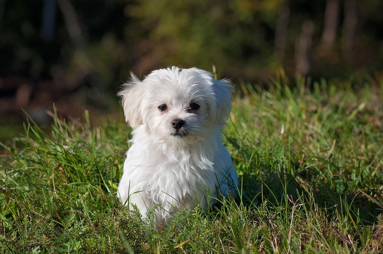 Porque o meu cão tem medo de sair de casa?