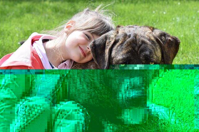 Por que os cães atacam crianças?