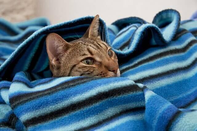 Por que os gatos se escondem em lugares escuros?