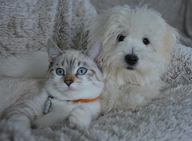 Como possuir um cão ou gato pode reduzir o estresse