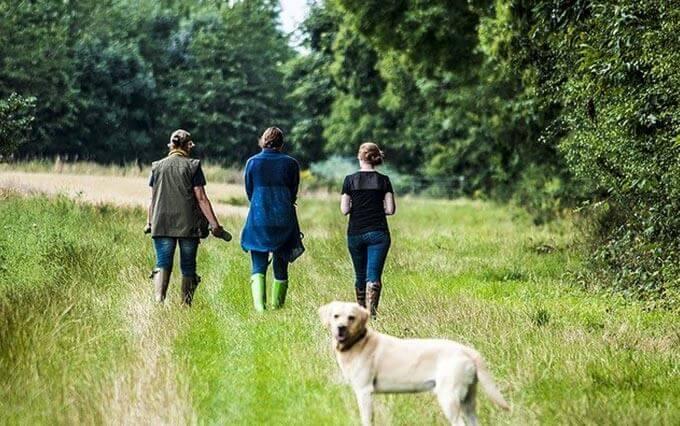 Problemas do trato urinário e infecções em cães
