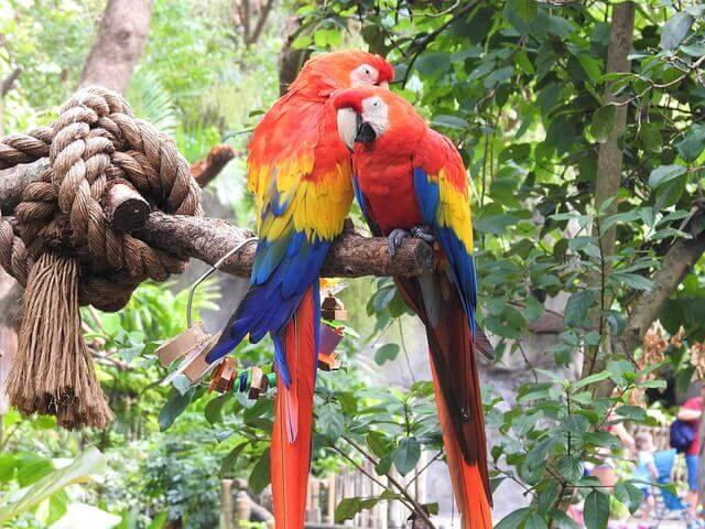Quais animais acompanham os papagaios?