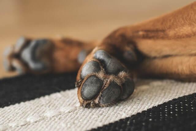 Quais são as causas das patas vermelhas nos cães?
